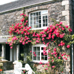 pet friendly holiday rental - cornwall
